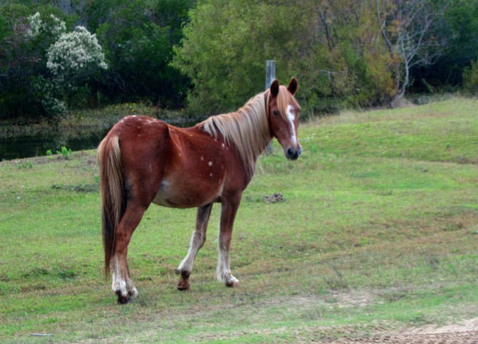 Wild Horse Corolla, North Carolina