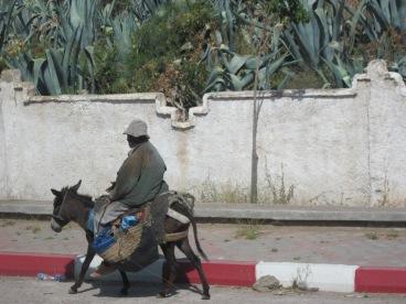 HOV Lane? Cairo